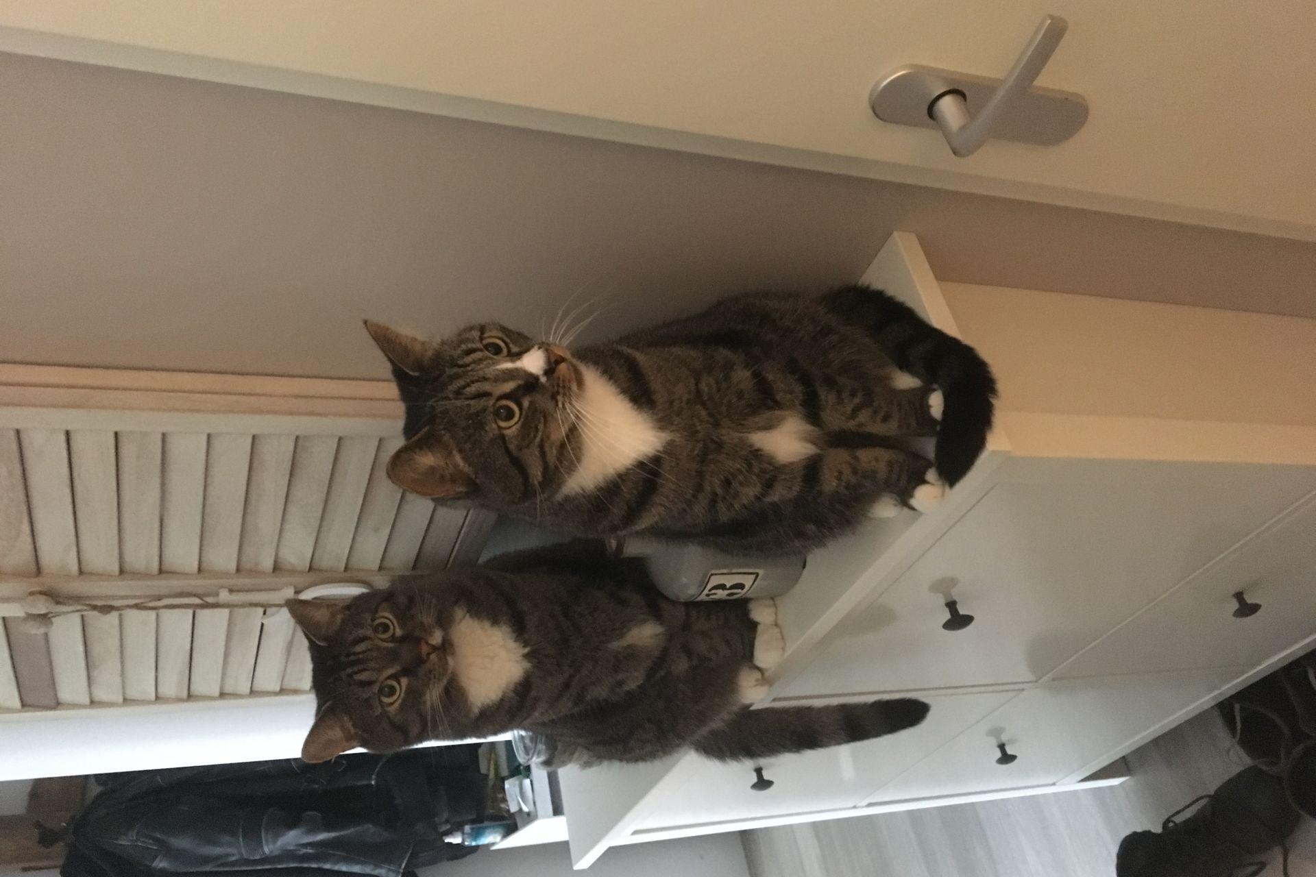 Jamie en Oliver twee lieve knuffel katten